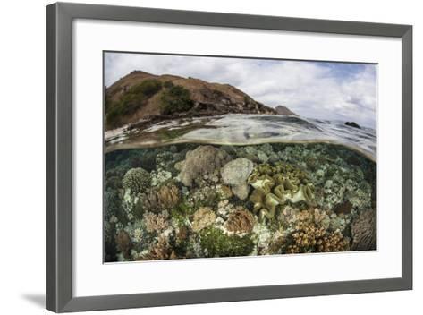 A Beautiful Reef Grows in Komodo National Park, Indonesia-Stocktrek Images-Framed Art Print