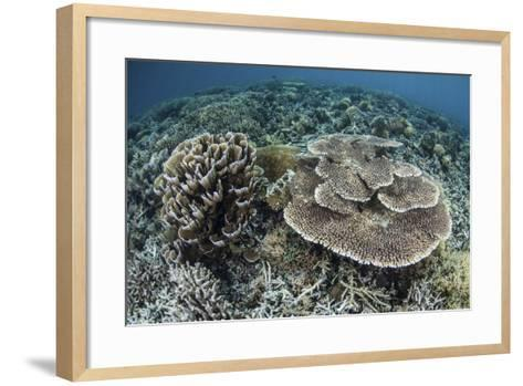 Delicate Corals Grow Near the Island of Flores in Indonesia-Stocktrek Images-Framed Art Print