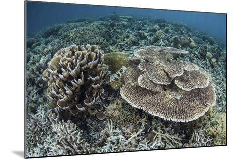 Delicate Corals Grow Near the Island of Flores in Indonesia-Stocktrek Images-Mounted Photographic Print