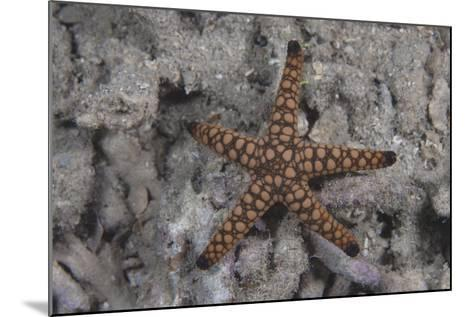 Close-Up of a Sea Star, Beqa Lagoon Fiji-Stocktrek Images-Mounted Photographic Print