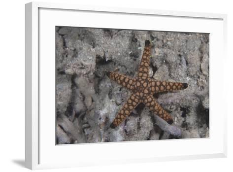 Close-Up of a Sea Star, Beqa Lagoon Fiji-Stocktrek Images-Framed Art Print
