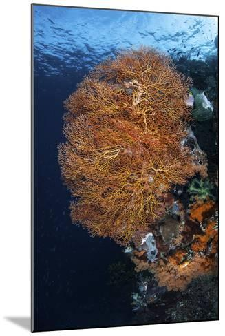 A Colorful Gorgonian Grows on a Reef Dropoff in Raja Ampat-Stocktrek Images-Mounted Photographic Print