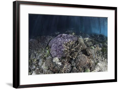 Corals Grow Along the Edge of a Mangrove Forest in Raja Ampat-Stocktrek Images-Framed Art Print