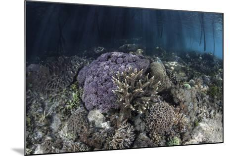 Corals Grow Along the Edge of a Mangrove Forest in Raja Ampat-Stocktrek Images-Mounted Photographic Print