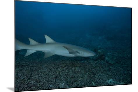 A Large Tawny Nurse Shark on a Deep Fijian Reef-Stocktrek Images-Mounted Photographic Print