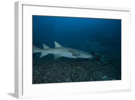 A Large Tawny Nurse Shark on a Deep Fijian Reef-Stocktrek Images-Framed Art Print