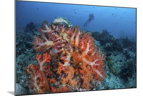 Vibrant Soft Coral Colonies Grow on a Reef in Lembeh Strait-Stocktrek Images-Mounted Photographic Print