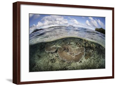 A Healthy Coral Reef Grows in the Solomon Islands-Stocktrek Images-Framed Art Print