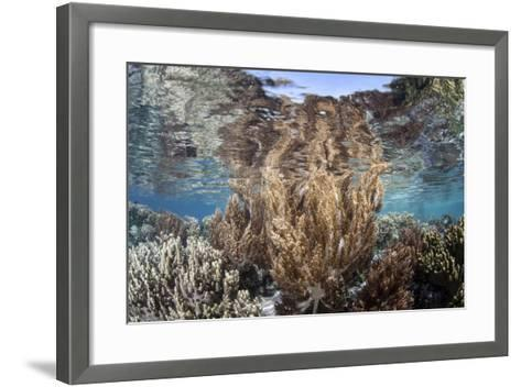 A Healthy and Diverse Coral Reef Grows in Raja Ampat, Indonesia-Stocktrek Images-Framed Art Print