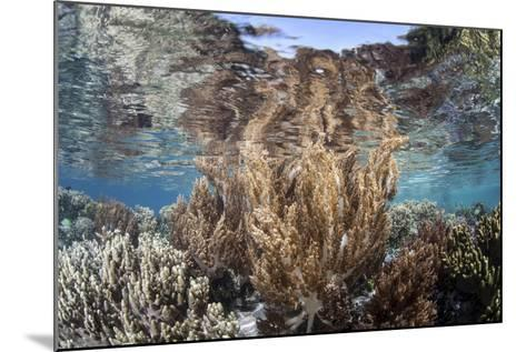 A Healthy and Diverse Coral Reef Grows in Raja Ampat, Indonesia-Stocktrek Images-Mounted Photographic Print
