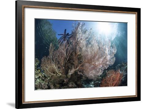 Sunlight Illuminates a Large Gorgonian Growing on a Reef in Raja Ampat-Stocktrek Images-Framed Art Print