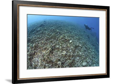 The Effects of Reef Bombing by Dynamite Fishermen, Komodo National Park, Indonesia-Stocktrek Images-Framed Art Print
