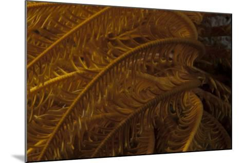 Close-Up Image of a Yellow Crinoid on a Fijian Reef-Stocktrek Images-Mounted Photographic Print