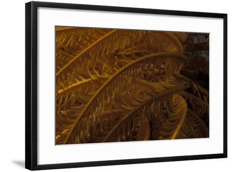 Close-Up Image of a Yellow Crinoid on a Fijian Reef-Stocktrek Images-Framed Art Print