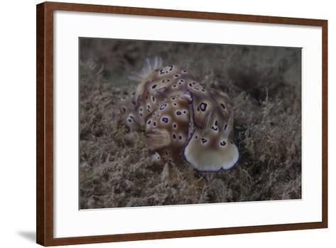 A Pair of Risbecia Tryoni Nudibranch, Beqa Lagoon, Fiji-Stocktrek Images-Framed Art Print