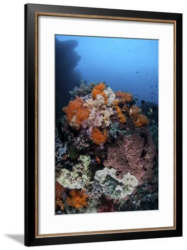 Soft Corals, Sponges, and Other Invertebrates on a Reef in Indonesia-Stocktrek Images-Framed Art Print