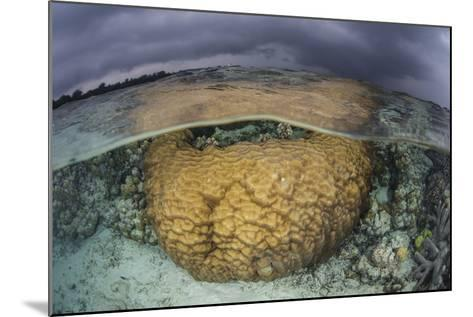 A Large Boulder Coral Colony Grows in Shallow Water in the Solomon Islands-Stocktrek Images-Mounted Photographic Print
