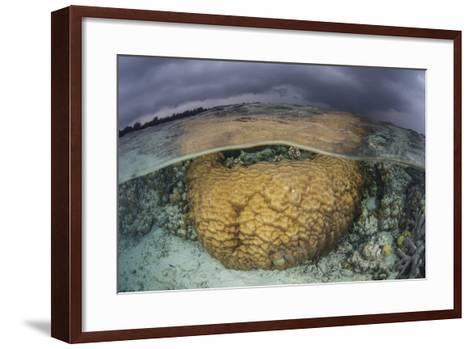 A Large Boulder Coral Colony Grows in Shallow Water in the Solomon Islands-Stocktrek Images-Framed Art Print