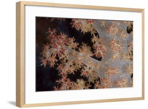 Close-Up of Tree Coral on a Fijian Reef-Stocktrek Images-Framed Art Print
