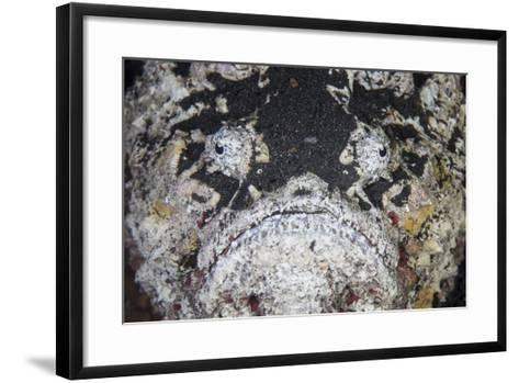 A Reef Stonefish Blends into its Underwater Surroundings-Stocktrek Images-Framed Art Print