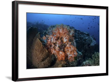 Beautiful Orange Soft Corals on a Current-Swept Reef in Indonesia-Stocktrek Images-Framed Art Print