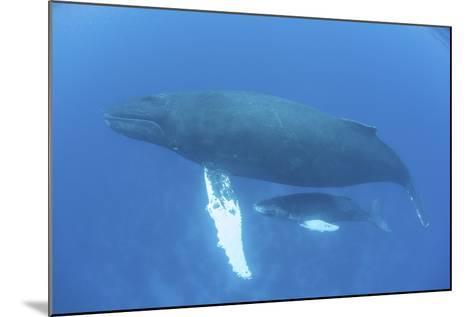 A Humpback Whale Mother and Calf in the Caribbean Sea-Stocktrek Images-Mounted Photographic Print