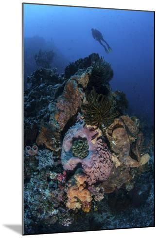 A Diver Above a Beautiful Reef in Komodo National Park, Indonesia-Stocktrek Images-Mounted Photographic Print