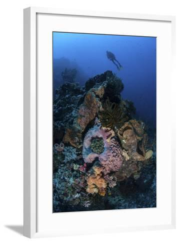 A Diver Above a Beautiful Reef in Komodo National Park, Indonesia-Stocktrek Images-Framed Art Print
