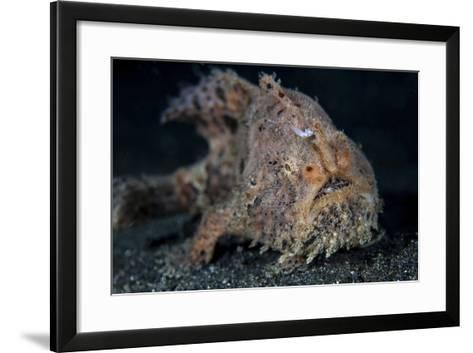A Hairy Frogfish in Lembeh Strait, Indonesia-Stocktrek Images-Framed Art Print
