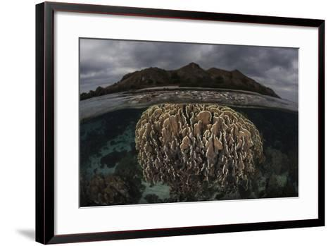 Fragile Corals Grow in Komodo National Park, Indonesia-Stocktrek Images-Framed Art Print