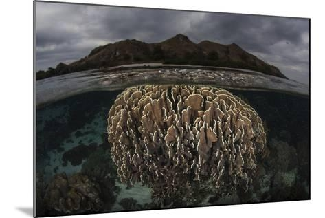 Fragile Corals Grow in Komodo National Park, Indonesia-Stocktrek Images-Mounted Photographic Print