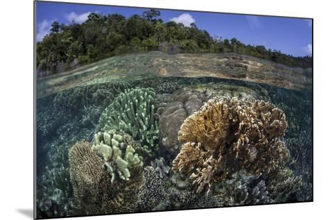 A Diverse Array of Reef-Building Corals in Raja Ampat, Indonesia-Stocktrek Images-Mounted Photographic Print