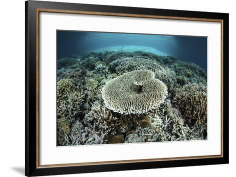 Corals Grow on a Shallow Reef in Indonesia-Stocktrek Images-Framed Art Print