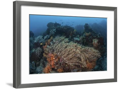 A Strong Current Sweeps across a Reef Slope in Indonesia-Stocktrek Images-Framed Art Print