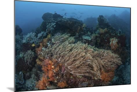A Strong Current Sweeps across a Reef Slope in Indonesia-Stocktrek Images-Mounted Photographic Print