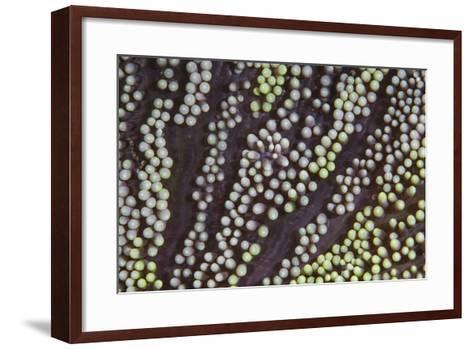 Detail of an Unidentified Anemone Growing on a Reef-Stocktrek Images-Framed Art Print