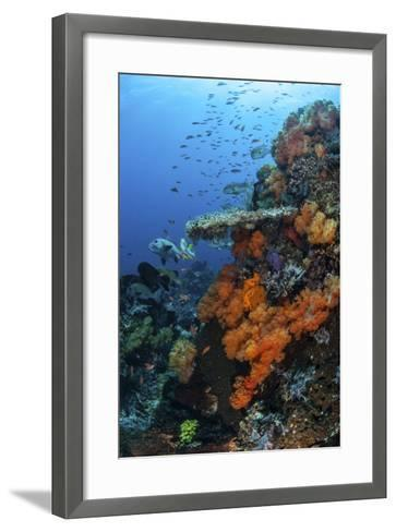 Soft and Hard Corals Grow on a Healthy Reef in Indonesia-Stocktrek Images-Framed Art Print
