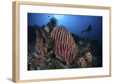 A Scuba Diver Explores a Reef with a Large Barrel Sponge, Indonesia-Stocktrek Images-Framed Art Print