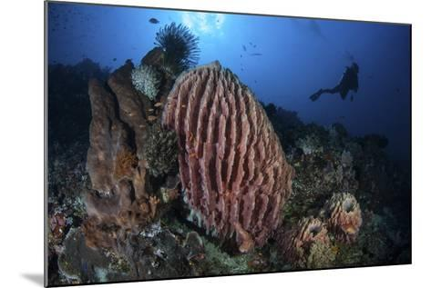 A Scuba Diver Explores a Reef with a Large Barrel Sponge, Indonesia-Stocktrek Images-Mounted Photographic Print