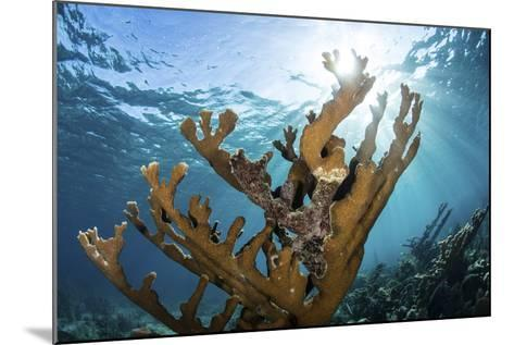 Elkhorn Coral Grows on a Healthy Reef in the Caribbean Sea-Stocktrek Images-Mounted Photographic Print