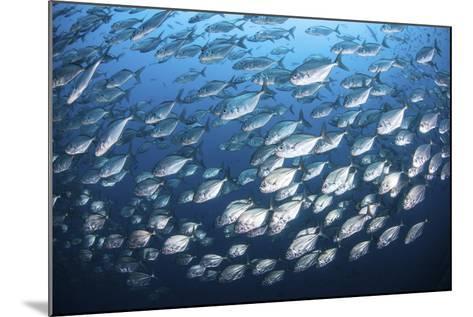 Schooling Fish Near Cocos Island, Costa Rica-Stocktrek Images-Mounted Photographic Print