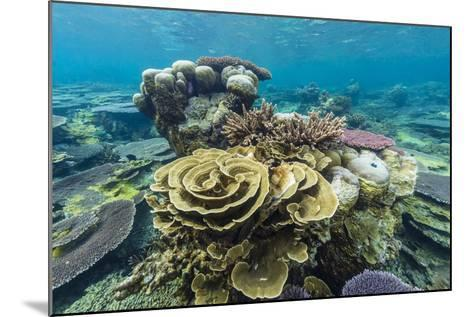 Underwater Reef on a Remote Small Islet in the Badas Island Group Off Borneo, Indonesia-Michael Nolan-Mounted Photographic Print