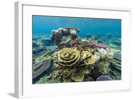 Underwater Reef on a Remote Small Islet in the Badas Island Group Off Borneo, Indonesia-Michael Nolan-Framed Art Print
