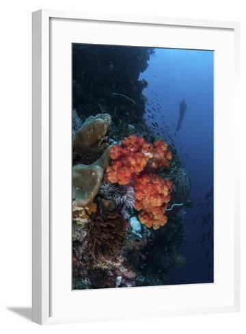 A Beautiful Soft Coral Colony Grows on a Reef Wall in Indonesia-Stocktrek Images-Framed Art Print