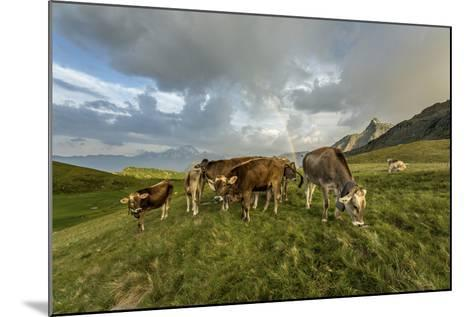 Rainbow Frames a Herd of Cows Grazing in the Green Pastures of Campagneda Alp, Valtellina, Italy-Roberto Moiola-Mounted Photographic Print