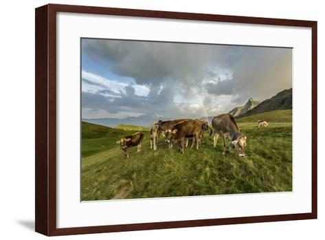 Rainbow Frames a Herd of Cows Grazing in the Green Pastures of Campagneda Alp, Valtellina, Italy-Roberto Moiola-Framed Art Print