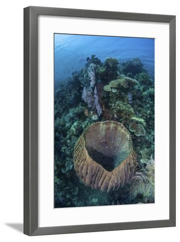 A Massive Barrel Sponge Grows on a Reef Near Alor, Indonesia-Stocktrek Images-Framed Art Print