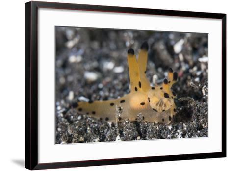 A Thecacera Nudibranch Crawls across the Seafloor-Stocktrek Images-Framed Art Print
