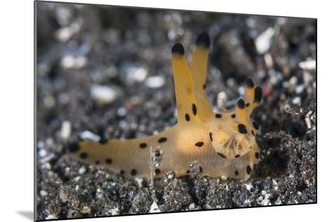 A Thecacera Nudibranch Crawls across the Seafloor-Stocktrek Images-Mounted Photographic Print