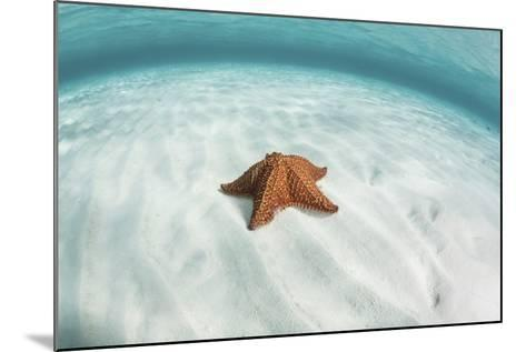 A West Indian Starfish on the Seafloor in Turneffe Atoll, Belize-Stocktrek Images-Mounted Photographic Print